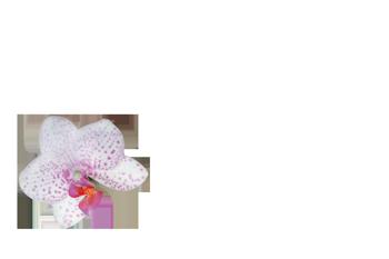 Blumen Hör Logo